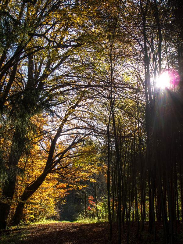 Herbst001